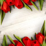 Tulipes Stock Photography