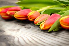 Tulipes Stock Photo