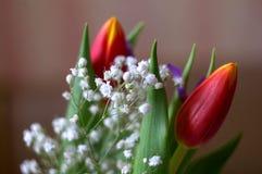 Tulipes pour des filles photo stock