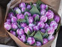 Tulipes pourprées photo libre de droits