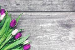 Tulipes pourpres et roses au-dessus de fond en bois rustique Photo libre de droits