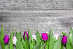 Tulipes pourpres et roses au-dessus de fond en bois rustique Images libres de droits