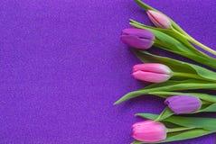 Tulipes pourpres et roses sur le fond pourpre de scintillement avec l'espace de copie photographie stock