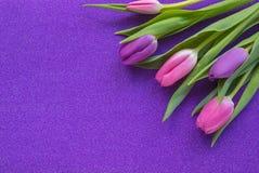 Tulipes pourpres et roses sur le fond pourpre de scintillement avec l'espace de copie photos libres de droits