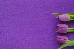 Tulipes pourpres et roses sur le fond pourpre de scintillement avec l'espace de copie photo libre de droits