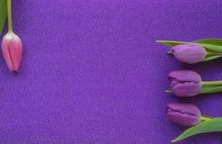 Tulipes pourpres et roses sur le fond pourpre de scintillement avec l'espace de copie image stock