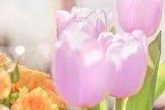 Tulipes pourpres pâles photo libre de droits