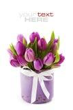 Tulipes roses Photos libres de droits