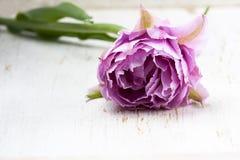 Tulipes roses au-dessus de la table en bois blanche Photo libre de droits