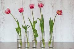 Tulipes roses dans des bouteilles en verre sur le fond en bois clair Photo stock