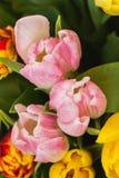 Tulipes roses de fleurs en gros plan Vue supérieure Cocept de jour du ` s de femmes, jour du ` s de mère, jour du ` s de Valentin Image stock
