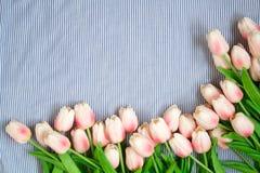 Tulipes roses de source Image libre de droits