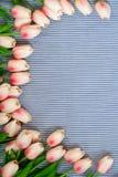 Tulipes roses de source Images libres de droits