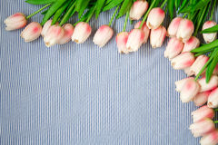 Tulipes roses de source Photo libre de droits