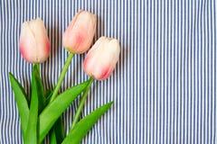 Tulipes roses de source Image stock