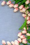 Tulipes roses de source Images stock