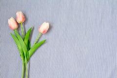 Tulipes roses de source Photos stock