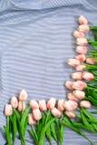 Tulipes roses de source Photographie stock libre de droits
