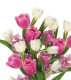 Tulipes roses et blanches sur le blanc photo stock