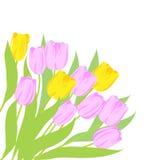 Tulipes roses et jaunes Photographie stock