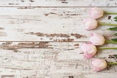 Tulipes roses renversantes sur le fond en bois rustique de lumière blanche Copiez l'espace, cadre floral Vintage, regard de brume Images stock