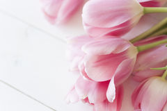 Tulipes roses sur le fond blanc Photo stock