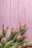 Tulipes roses sur le fond en bois rose, Joyeuses Pâques, printemps Images libres de droits