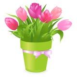 Tulipes roses. Vecteur Photos libres de droits
