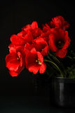 Tulipes rouges Photo stock