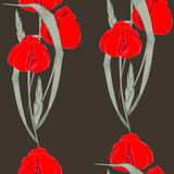 Tulipes rouges Images stock