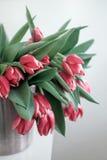 Tulipes rouges dans un seau de fer Photographie stock libre de droits