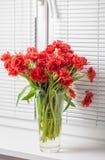 Tulipes rouges dans un vase en verre sur le rebord de fenêtre Photographie stock libre de droits