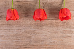 Tulipes rouges dans une rangée ci-dessus sur le style minimaliste de fond brun clair, l'espace de copie Image stock
