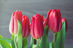 Tulipes rouges de ressort sur le fond en bois gris Photo stock