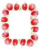 Tulipes rouges de vue pour des invitations, labels, cartes watercolor illustration de vecteur