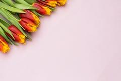 Tulipes rouges et jaunes se situant dans une rangée sur le fond en pastel avec l'endroit pour le texte contre les jeunes jaunes b Images stock