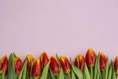 Tulipes rouges et jaunes se situant dans une rangée sur le fond en pastel avec l'endroit pour le texte contre les jeunes jaunes b Photo libre de droits