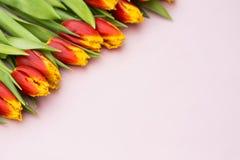 Tulipes rouges et jaunes se situant dans une rangée sur le fond en pastel avec l'endroit pour le texte contre les jeunes jaunes b Photographie stock
