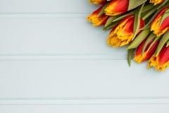 Tulipes rouges et jaunes se situant dans une rangée sur le fond en pastel avec l'endroit pour le texte contre les jeunes jaunes b Photos libres de droits