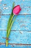Tulipes rouges fraîches Image stock