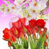 Tulipes rouges fraîches de jardin sur le fond abstrait Photographie stock libre de droits
