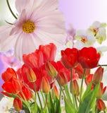 Tulipes rouges fraîches de jardin sur le fond abstrait Images stock