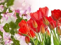 tulipes rouges fraîches sur le fond abstrait de nature de ressort Photos stock