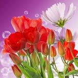 tulipes rouges fraîches sur le fond abstrait de nature de ressort Images libres de droits