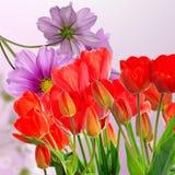 Tulipes rouges fraîches de jardin sur le fond abstrait Photos stock