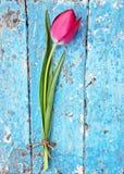 Tulipes rouges sur le fond en bois bleu de vintage Images stock