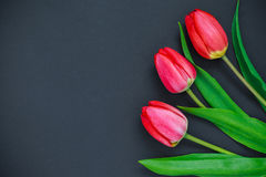 Tulipes rouges sur un fond noir Photo stock
