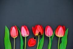 Tulipes rouges sur un fond noir Images stock