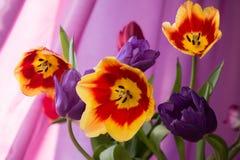 Tulipes, sentiments frais Image libre de droits