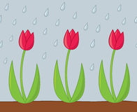 Tulipes sous la pluie Photographie stock